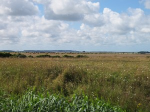 View from the wetlands of a rest stop in Picardie